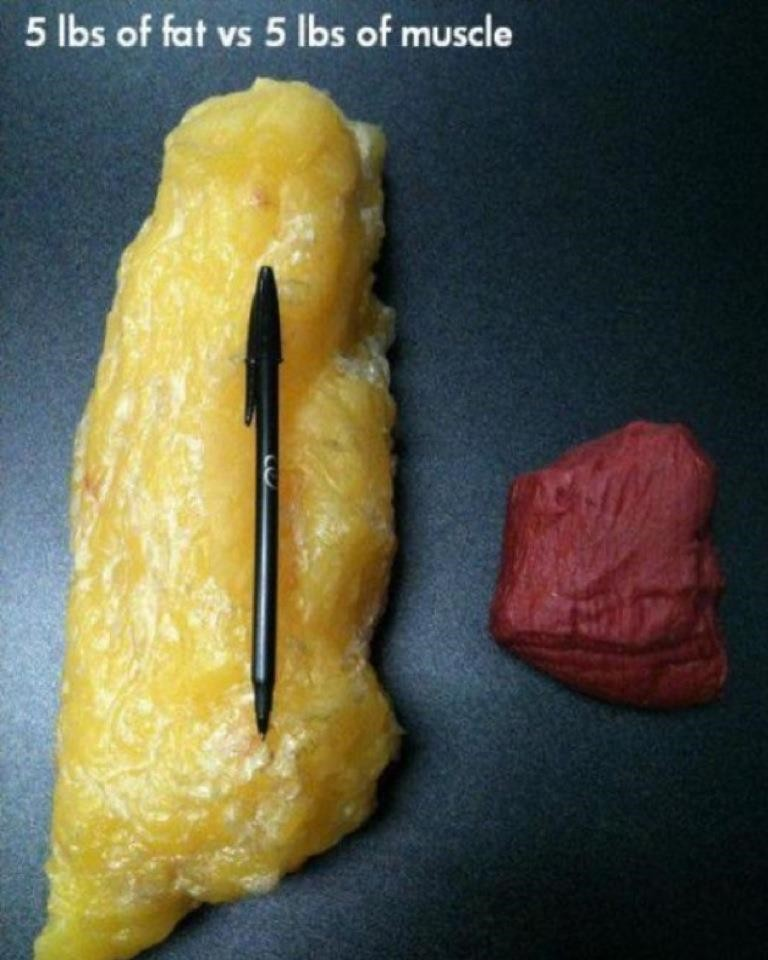 5-pounds-of-fat-vs-5-pounds-of-muscle-mass-comparison